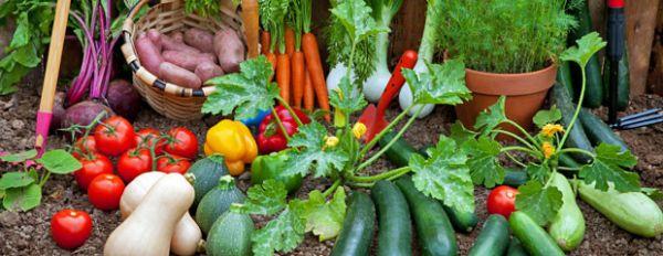 potager-en-août-les-travaux-du-jardin-Jardiniers-Professionnels-620x240
