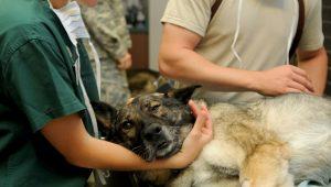 Les domaines d'intervention des vétérinaires