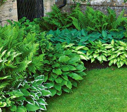 Le choix des plantes