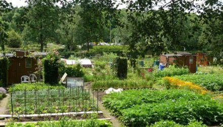 Créer un jardin partagé : de la convivialité et des économies