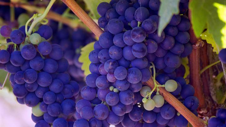 Le vin s'invite dans vos vacances, en Bourgogne !